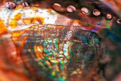 Primer de nacarado Textura multicolora de la concha marina, textura multicolora del nácar Fondo coloreado del nácar foto de archivo