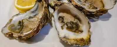 Primer de ostras abiertas frescas fotos de archivo