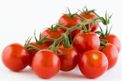 Primer de pequeños tomates rojos en una rama Imágenes de archivo libres de regalías