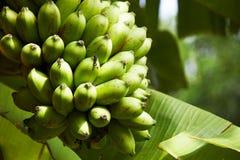 Primer de plátanos Foto de archivo