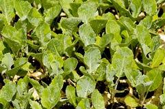 Primer de plantas de semillero Fotografía de archivo