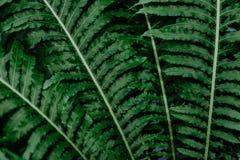 Primer de plantas tropicales verdes fotos de archivo libres de regalías