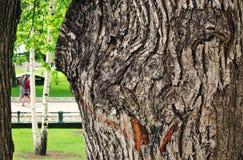 Primer de tres troncos Foto de archivo