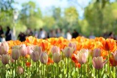 Primer de un c?sped con los tulipanes brillantes y la gente rojos y rosas claros que los miran y que tiran de detr?s imagen de archivo libre de regalías
