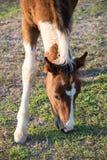 Primer de un caballo Foto de archivo