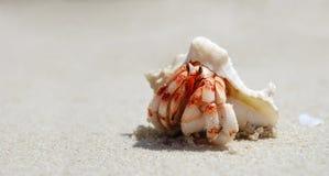 Primer de un cangrejo de ermitaño con el shell fotografía de archivo libre de regalías