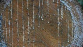 Primer de un corte del árbol de pino con la resina almacen de video