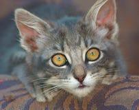 Primer de un gatito lindo, con los ojos abiertos foto de archivo libre de regalías
