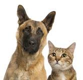 Primer de un gato y de un perro Fotos de archivo libres de regalías