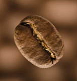 primer de un grano de café en fondo marrón   Fotos de archivo libres de regalías