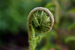 Primer de un helecho verde en jardín botánico fotografía de archivo libre de regalías