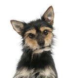 Primer de un perro de la mezclado-raza que mira la cámara, aislado Imagen de archivo