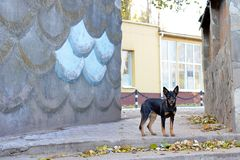 Primer de un perro negro asustadizo Fotografía de archivo libre de regalías