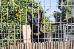 Primer de un perro que mira a través de las barras de un fance Fotografía de archivo libre de regalías