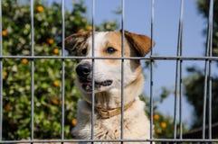 Primer de un perro que mira a través de las barras de un fance Foto de archivo libre de regalías