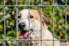 Primer de un perro que mira a través de las barras de un fance Imágenes de archivo libres de regalías
