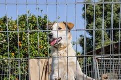 Primer de un perro que mira a través de las barras de un fance Fotos de archivo libres de regalías