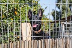 Primer de un perro que mira a través de las barras de un fance Imagenes de archivo