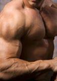Primer de un torso del bodybuilder Fotos de archivo libres de regalías