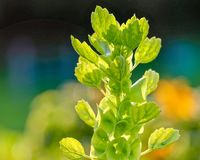 Primer de un wildflower verde claro coloreado multi hermoso en luz del sol brillante Fotografía de archivo