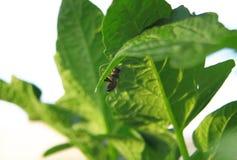 Primer de una abeja en una hoja verde por luz del día Fotografía de archivo