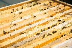 Primer de una abeja que trabaja recogiendo la miel Imagen de archivo