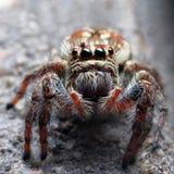 Primer de una araña Foto de archivo