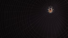 Primer de una araña en la web almacen de video