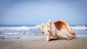 Primer de una cáscara del mar que miente en una orilla imágenes de archivo libres de regalías