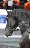 Primer de una cabeza de caballo con el detalle en el ojo Foto de archivo libre de regalías