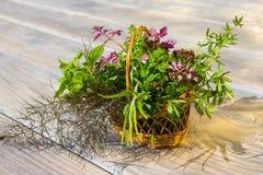 Primer de una cesta con las hierbas curativas Fotografía de archivo
