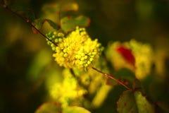 Primer de una flor Imagenes de archivo