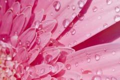 Primer de una flor con gotas del agua Imagen de archivo