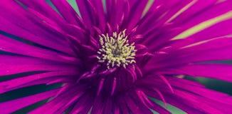 Primer de una flor púrpura imagenes de archivo