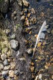 Primer de una floración algácea del sufrimiento de agua dulce de la eutroficación severa después de un período largo del calor du fotografía de archivo libre de regalías