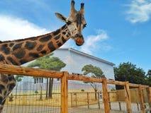 Primer de una jirafa delante de algunos árboles verdes, imagenes de archivo