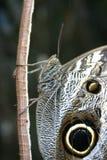 Primer de una mariposa imagenes de archivo