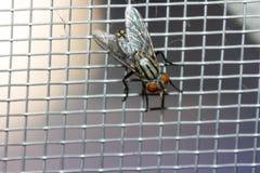 Primer de una mosca en la red Imagen de archivo libre de regalías