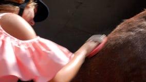 Primer de una muchacha en un casco que monta con un cepillo especial, peinando su caballo joven marrón 4K v?deo 4K almacen de metraje de vídeo
