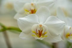 Primer de una orquídea blanca imagen de archivo