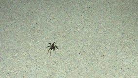 Primer de una pequeña araña negra que corre rápidamente en una superficie concreta en un área encendida almacen de metraje de vídeo