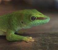 Primer de una salamandra verde Imagen de archivo