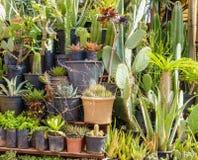 Primer de una variedad de cactus en potes Foto de archivo libre de regalías