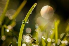 Primer de waterdrops Fotografía de archivo