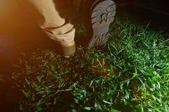 Primer de zapatos que caminan que caminan Imagenes de archivo