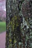 Primer del árbol del alto contraste imágenes de archivo libres de regalías