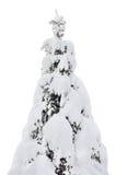 Primer del árbol de abeto Nevado, ramas nevadas frescas, vertical aislada detallada grande Fotos de archivo