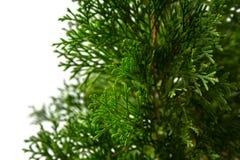 Primer del árbol de navidad Foto de archivo libre de regalías