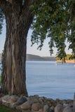 Primer del árbol en el lago Pepin imagen de archivo