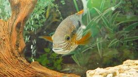 Primer del acuario que muestra diversos pescados coloridos que nadan metrajes